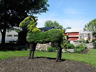 Mackandtwinehorse
