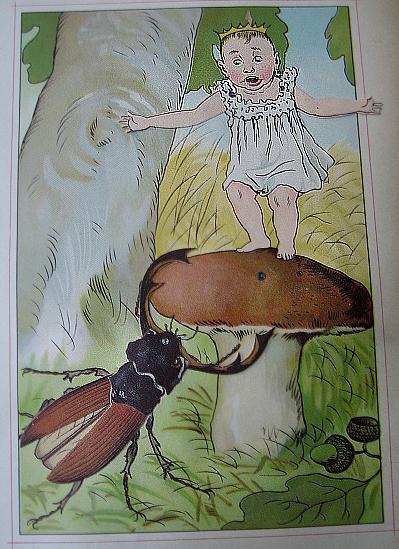 Lilliput-bug