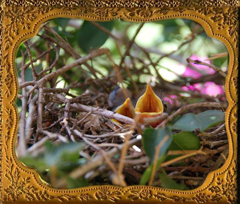 Babybirds-prudence