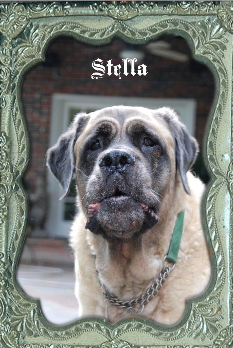 Stella-frame1 copy