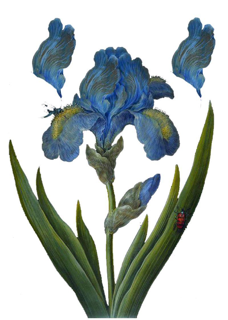 Flowertutorial1a
